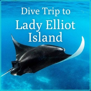 Lady Elliot Island Holiday