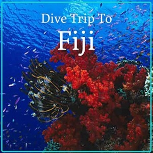 Fiji Group Trip