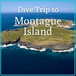 Montague Island Weekend