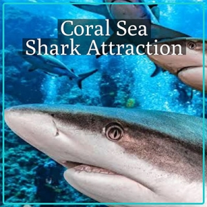 Coral Sea Sharks Attraction
