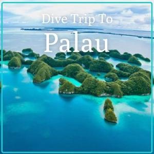 Palau Dive Holiday