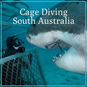 Great White Shark Cage Dive Trip