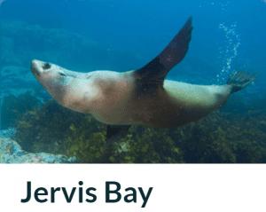 Jervis Bay Diving Weekend Trip
