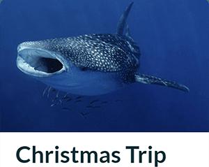 Christmas Trip