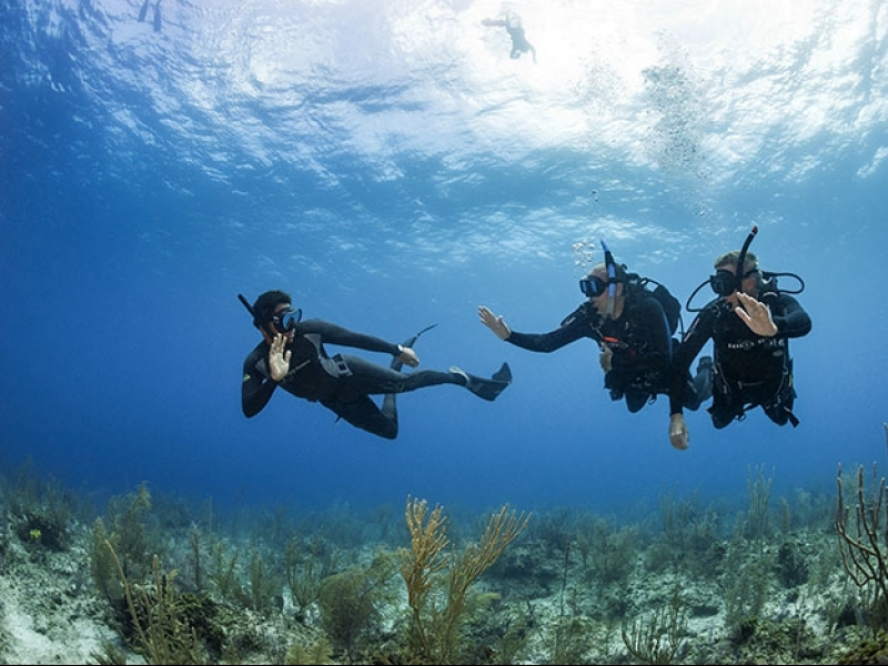 Why Become A Padi Freediving Centre