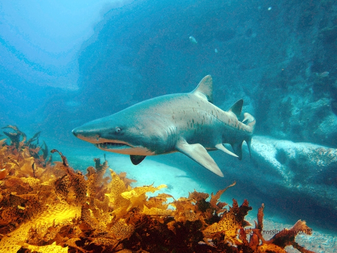 Magic Point Sharks And The Padi Advanced Course