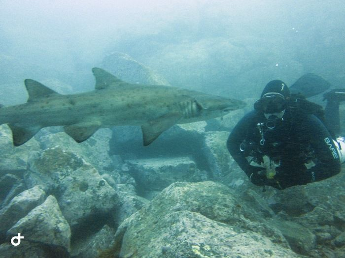Shark-shellharbour.JPG
