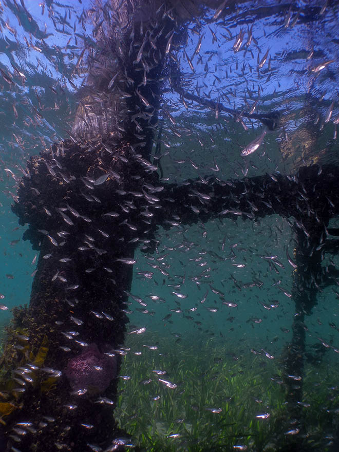 Pier Diving