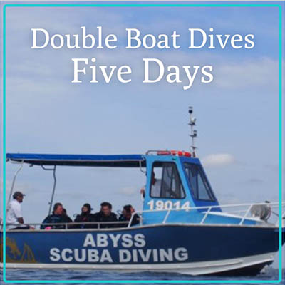Five Boat Dives Gift certificate