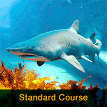 Standard Advanced Open Water Course