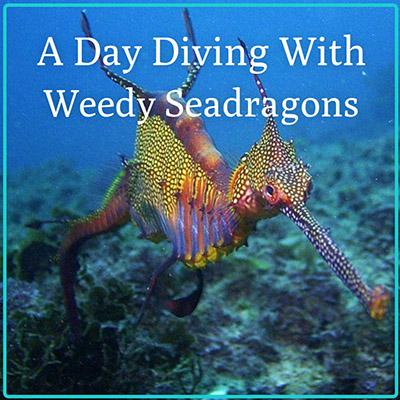 Gift Certificate -  Seadragon Dive