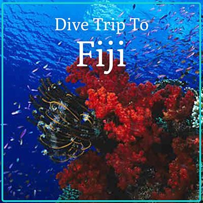 Fiji Dive Holiday Gift certificate