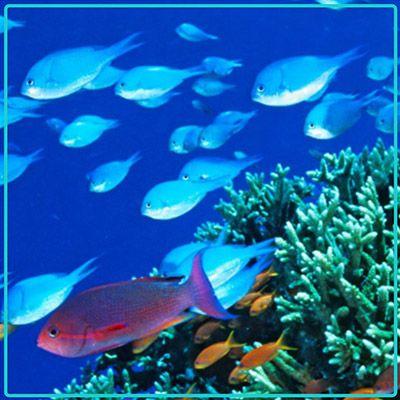 Great Barrier Reef - Liveaboard