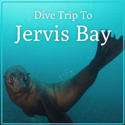 Jervis Bay Dive Trip
