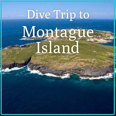 Montague Island Dive Trip