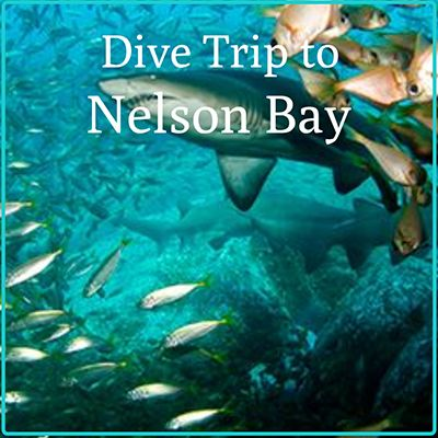 Nelson Bay Dive Trip Gift certificate