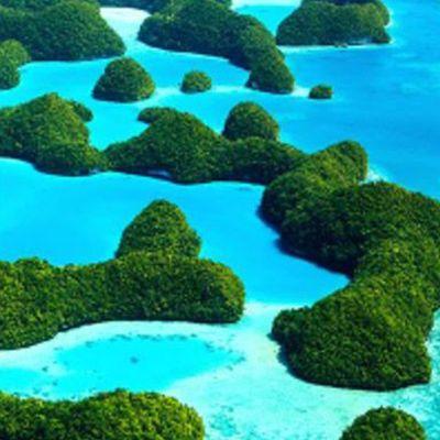Palau Dive Trip