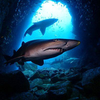 Fish Rock Cave